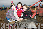 REPAIRING: Mary O'Mahony, Michelle and Rachel McCarthy who getting to grips on one of the plough at thje Abbeydorney Ploughing competition on Sunday in Abbeydorney............. ....