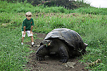 A young boy (MR) observing a Galapagos Giant Tortoise (Geochelone elephantopus) eating in a grassy field on Santa Cruz Island, Galapagos, Ecuador.