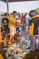 Fish for sale at Negombo fish market (Lellama fish market), Negombo, West Coast of Sri Lanka, Asia. This is a photo of fish for sale at Negombo fish market (Lellama fish market), Negombo, West Coast of Sri Lanka, Asia.