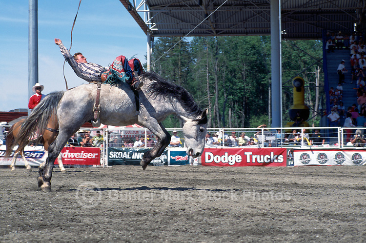 Cowboy Bareback Riding on Horse at the Cloverdale Rodeo, Surrey, British Columbia, Canada
