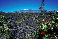 Ohia plant with Snow capped Mauna Kea in backround