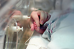 Adult hand holding premature newborn hand in incubator crib