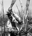 Mulher canavieira - Campos, Rio de Janeiro..Sugar cane woman - Campos, Rio de Janeiro.