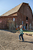USA, Oregon, Bend, the annual pumpkin patch located in Terrebone is equipt with a corn maze, petting farm, pumpkin cannon and rests underneath the breathtaking Smith Rock State Park