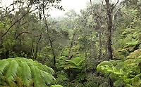 Ferns in the mist at the Big Island's Thurston lava tubes.