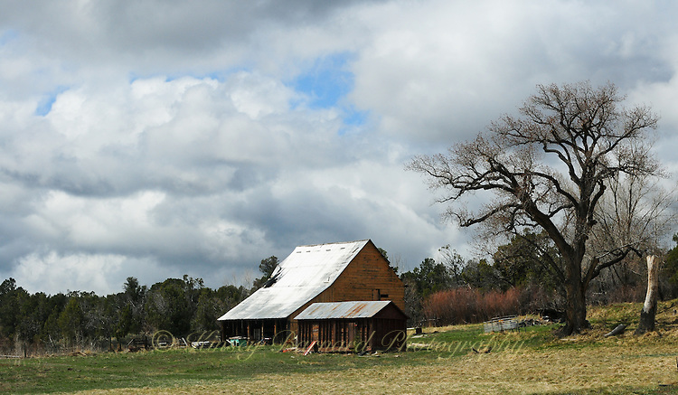 Cortez ranch with barns and beautiful old tree in the landscape.