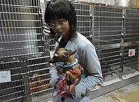 A worker in the recovery room with a dog rescued from the nuclear evacuation zone by ARK animal refuge outside Osaka, Japan, 26th May 2011.  ARK has rescued more than 200 dogs, 16 cats and a guinea pig from with-in the nuclear exclusion zone surrounding the Fukushima Daiichi nuclear power plant in Japan...© Richard Jones/ sinopix.PHOTO BY SINOPIX