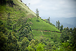 Sri Lanka | Tea Country + Plantations
