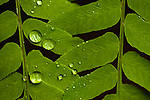 Fern close-up of water droplets and rich green earthy color and nature patterns
