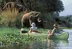 Approaching AFRICAN ELEPHANTS by CANOE is an unforgettable experinece -  ZAMBEZI RIVER, ZIMBABWE