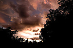 Gallery forest at sunset, Lope National Park, Gabon, Lope National Park, Gabon