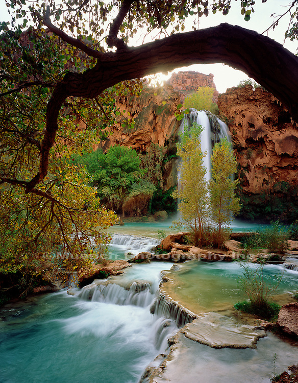 Havasu Falls Grand Canyon NP  ARIZONA