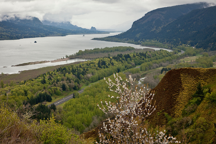 Spring in the Columbia River Gorge of Oregon
