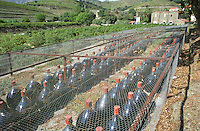 Demi-johns (demi-jeannes) of ageing Banyuls wine stored traditionally outside in the sunshine, protected by a wire net, Domaine Clos des Paulilles, banyuls Languedoc-Roussillon, France