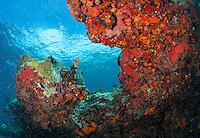 Coral reef scenic<br /> Red encrusting sponges<br /> Little St. James<br /> US Virgin Islands
