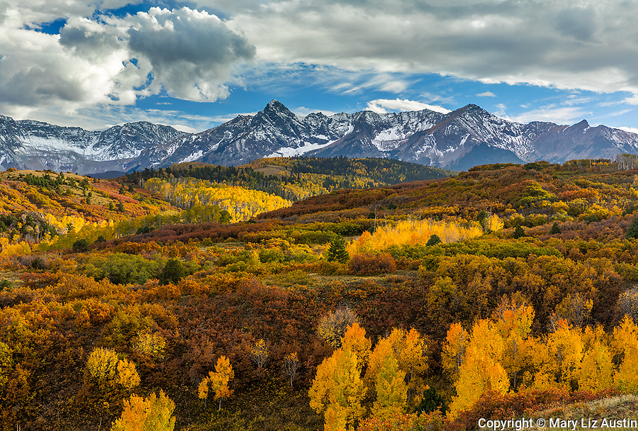 Uncompahgre National Forest, Colorado: Fall colors on the Dallas Divide with the Sneffels range in the distance