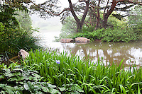 Pond edged with Iris leading to waterfall and misty views in Chicago Botanic Garden