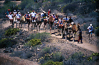 Camel safari in the south of Tenerife, Canary Islands, Spain