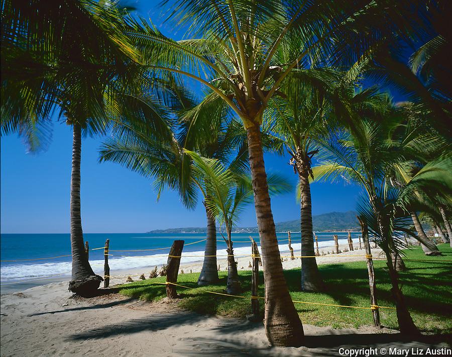 Nayarit, Mexico:  Coconut palms (Coco nucifera) on the beach of Bahia de Banderas (Banderas Bay) near the village of Bucerias