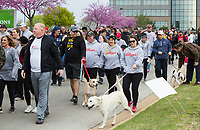 NWA Democrat-Gazette/BEN GOFF @NWABENGOFF<br /> Walkers start their 1.5 mile stroll Saturday, April 13, 2019, during the Northwest Arkansas Heart Walk starting from the Walmart Arkansas Music Pavilion in Rogers. This year is the 25th anniversary for the American Heart Association's annual walk with locations around the country. This year's Northwest Arkansas walk raised more than $1 million with donations still coming in as of Saturday morning, said to Lauren Wheeler with the American Heart Association Northwest Arkansas.