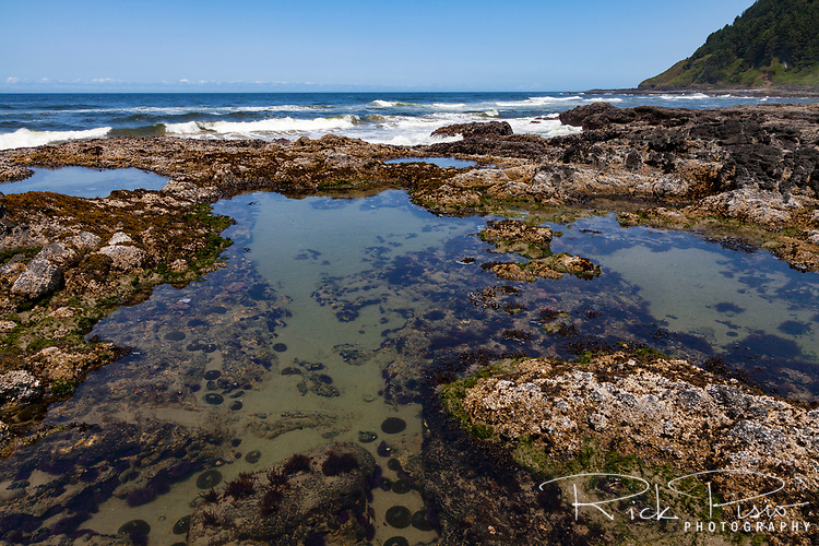 Low tide exposes the tidepools on the rugged lava flows at Cape Perpetua Scenic Area along Oregon's Central Coast south of Yachats.