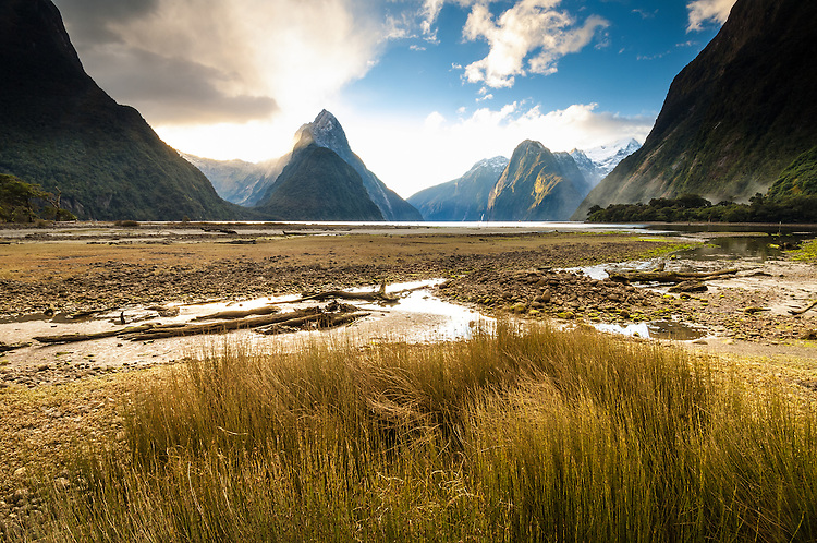 Low tide close to sunset at Mitre Peak with reeds in the forerground, Milford Sound, Fiordland National Park, New Zealand - stock photo, canvas, fine art print