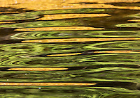 Rockweed and trees are reflected in the waters of the Pacific.