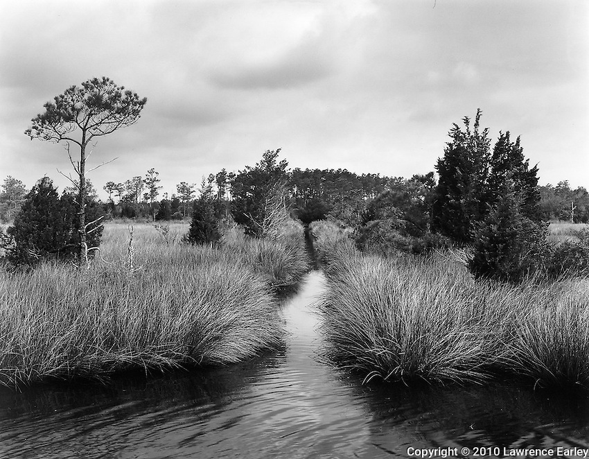 These canals were dug into the vast marshes of Down East North Carolina to reduce mosquito populations.