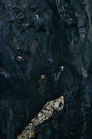 Four jumbers in formation flying down the mountain Vikesaksa. The remote Eikesdal Valley has some spectacular mountains, well suited for BASE jumping. Norwegian BASE (Bridge, Antenna, Span, Earth - ie. parachute jumping from fixed objects) jumpers using wingsuits. First they drop vertically to gain speed, then the suits allow them fly over the sloping landscape. © Fredrik Naumann