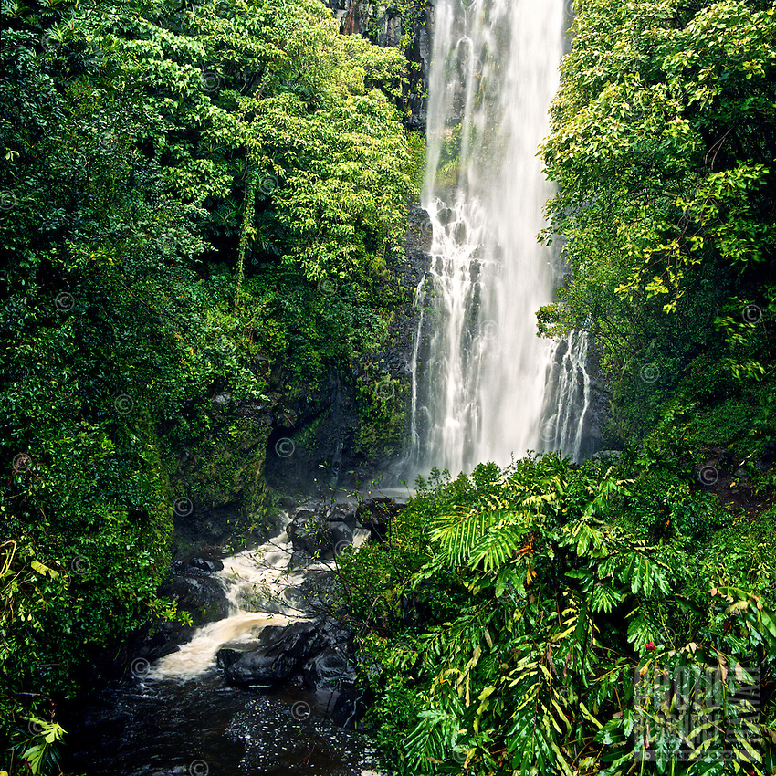 Water from a waterfall flows into a lava rock pool surrounded by lush foliage in Hana, Maui.