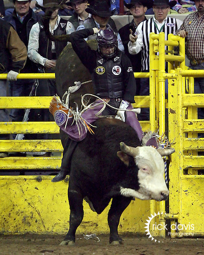 1/25/09--Photo by Rick Davis--PRCA cowboy Kanin Assay of Powell, Wyoming rode back to back bulls in the final round action of the 103rd National Western Stock Show and Rodeo in Denver, Colorado.  Kanin received a re-ride option on his first bull Cigarette Butt, and then took his re-ride bull Border Denial from the Calgary Stampede Rodeo Company for an 89 point ride to clinch the Bullriding title with a total of 264 points on 3 bulls.