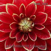 Gisela, FLOWERS, BLUMEN, FLORES, photos+++++,DTGK1957,#f#