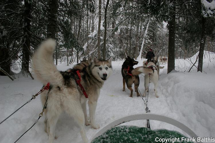 Dog sledding with Aventure Inukshuk.