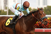 Mountain Eagle wins 2 year old maiden race at Gulfstream Park.  Hallandale Beach Florida. 12-08-2012