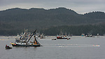 Fishing for Pacific Herring (Clupea pallasii), Sitka Sound, Alaska, USA.