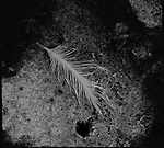 A small tatty single feather