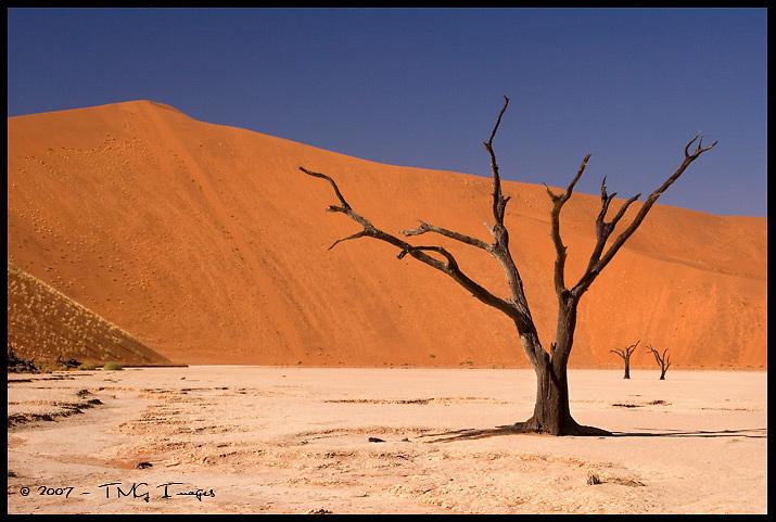 Dead Vlei<br /> Namib-Naukluft National Park, Namibia