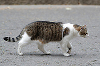 Theresa Mary May British prime minister avoided Question Time in Parliament by instead flying to Brussels for talks with the EU.  It was left to the trusty Downing Street cat to look after affairs and to face any problems. <br /> Larry is the 10 Downing Street cat and is Chief Mouser to the Cabinet Office. He is a brown and white tabby, believed born in January 2007.<br /> London, England on June 11, 2018.<br /> CAP/GOL<br /> &copy;GOL/Capital Pictures /MediaPunch ***NORTH AND SOUTH AMERICAS ONLY***