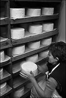 Europe/France/Aquitaine/64/Pyrénées-Atlantiques/Pays Basque/ Saint-Martin-d'Arberoue: Ferme Agerria  de Bernadette et Jean-Claude Pochelu -  Préparation de l'AOC Ossau-Iraty - L'affinage: placé dans une cave humide,le fromage est régulièrement retourné.<br /> Auto: 11-012