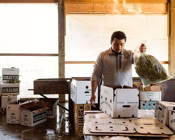 December 30, 2016. Rose Hill, North Carolina.<br /> <br /> John Dunn helps pack and load produce at Cottles Organics, a farm where he has worked since he was a child.<br />  <br /> John Dunn, age 19, is currently a freshman at NC State University and is the first person in his family to go to college. With a combination of grants, loans, help from his grandfather and weekend farm work, Dunn hopes to find finish college and find a career in agriculture.<br /> <br />  Colleges and universities, which are always trying to pinpoint an under-served and sometimes underprivileged populations of students, have noted a decline in students from rural areas of the country. There are various efforts underway in colleges and universities to identify more of these kids and get them enrolled.