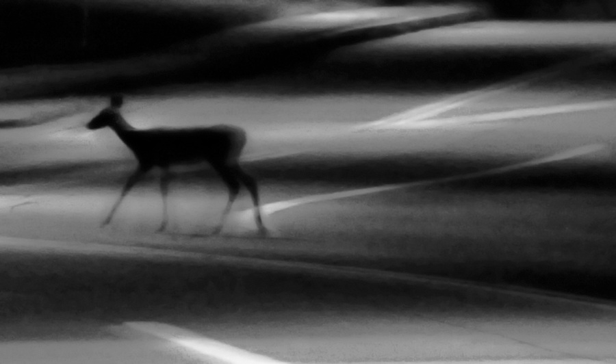 reduce noise 10/10. GB1 September 23, 2016 about 2 a.m. Castle Shannon   Borough, Scott Road. A fawn that is about 1 month old follows its mother a cross the street and over a guard railing into the property of Ice Castle. JimMendenhallPhotos.com +48sat but earlier -40 R. Mode Gray. Mode rgb. Yellow curve wp to 75 midpoint 50.