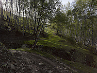 FOREST_LOCATION_90058