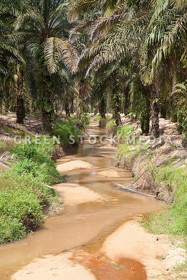 A creek flowing through the Sindora Palm Oil Plantation, owned by Kulim. The plantation is green certified by the Roundtable on Sustainable Palm Oil (RSPO) for its environmental, economic, and socially sustainable practices. Johor Bahru, Malaysia