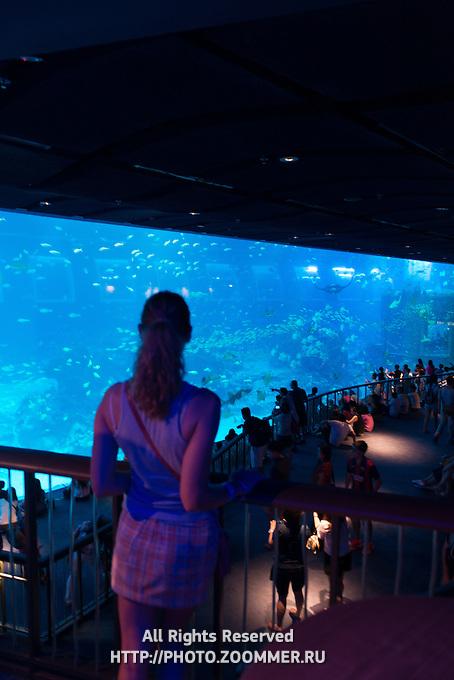 Girl Near Giant Panoramic Panel Of Sentosa SEA Aquarium, Singapore