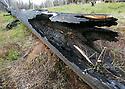 Burned tree trunk fire damage in Wenatchee Mountains landscape near Blewett Pass, WA