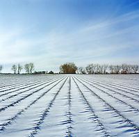 Farm land and pheasant habitat near Grand Island, Nebraska, Sunday, December 4, 2011.