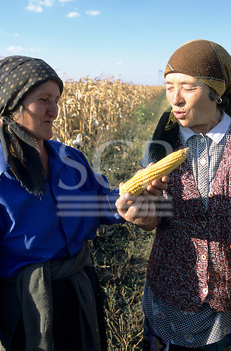 Romania. Two elderly rural women farmers discussing a head of sweet corn in their fields.