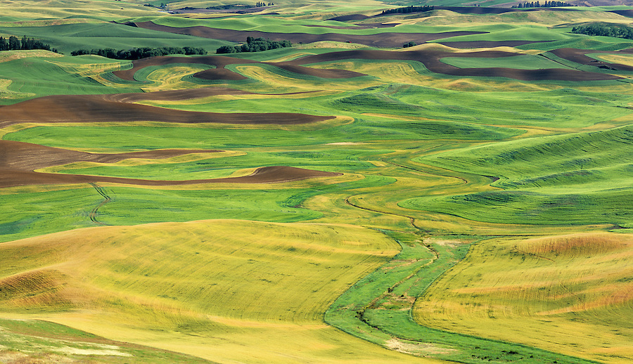 Odd light in mid-summer in the Palouse of Eastern Washington shows the contours and rolling hills of the farmland.