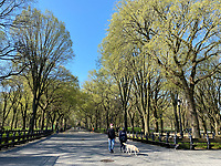 New York, New York City, during the time of Coronavirus. People wear face masks while walking their dog amd enjoying  a spring day in Central Park.