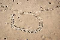 tracks of hatchling Australian flatback sea turtle, Natator depressus, on beach at Crab Island, off Cape York Peninsula, Torres Strait, Queensland, Australia